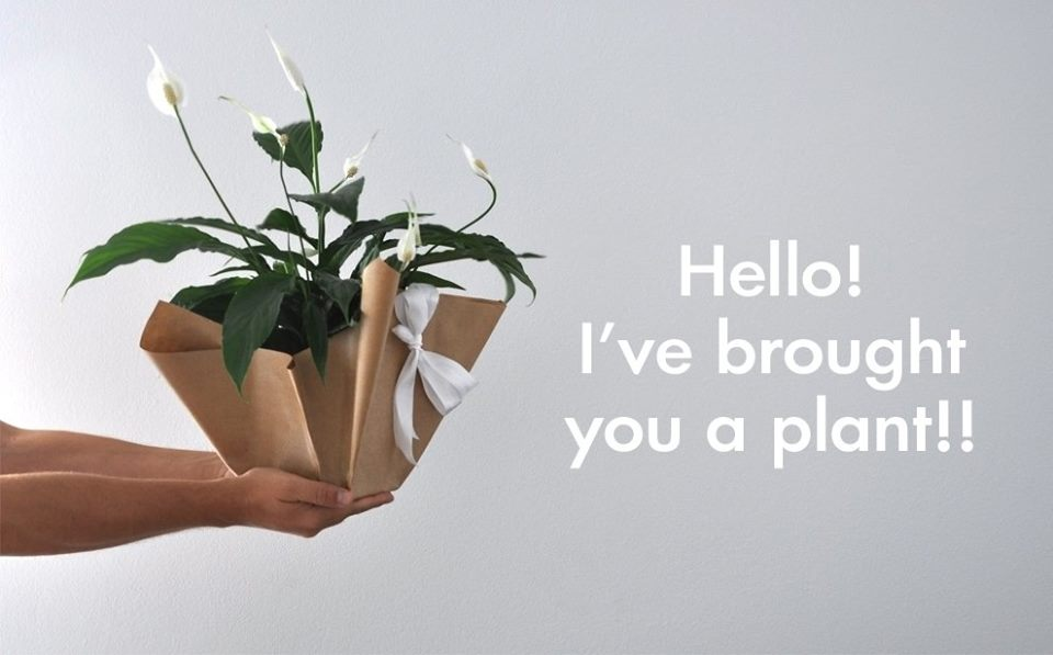 Athina Garden City Part 2: Γεια! Σας έφερα ένα φυτό!!